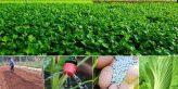 Trồng rau sạch kinh doanh ở nông thôn cần chú ý điều gì