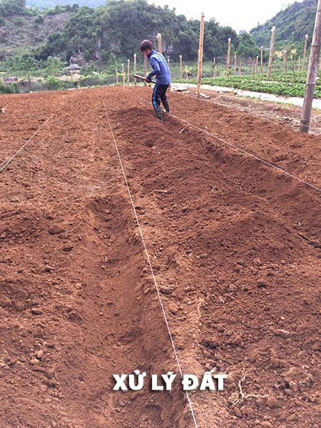 Xử lý đất trồng rau