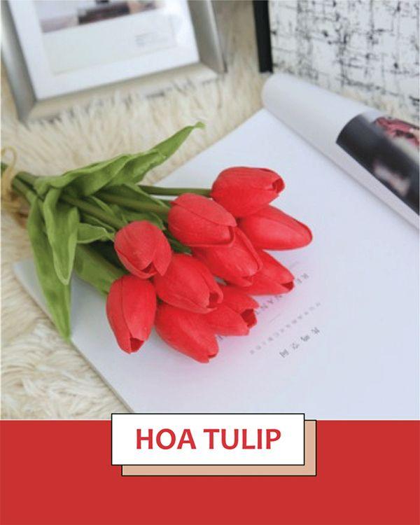 Hoa Tulip được người phương Đông coi trọng