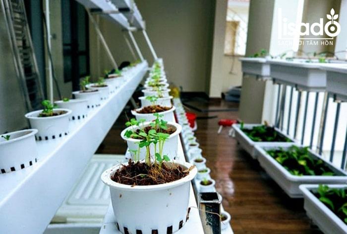 Rọ nhựa thủy canh là vật dụng không thể thiếu khi trồng cây thủy canh