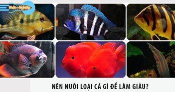 Nên nuôi loại cá gì để làm giàu?