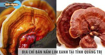 Top 1 địa chỉ bán nấm lim xanh uy tín tại tỉnh Quảng Trị